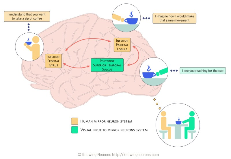 Mirror Neurons_Knowing Neurons