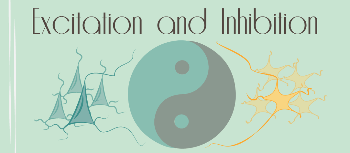 Excitation and Inhibition: The Yin and Yang of the Brain