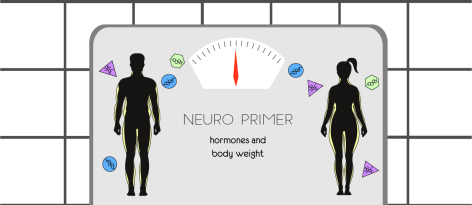 Neuro Primer: Hormones and Body Weight (Illustrated by McCall Sarrett)