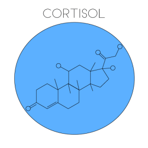 Cortisol Hormone (Illustrated by McCall Sarrett)