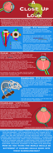 A Close Up Look #3 - Chameleon Vision/Focusing Infographic