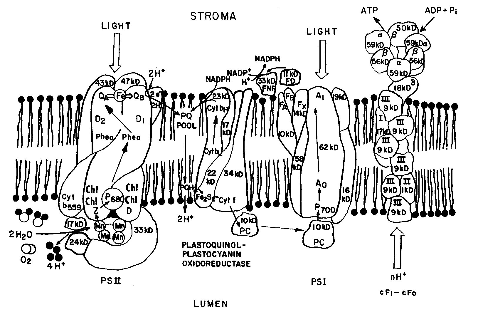 Electrochemistry Encyclopedia Electrochemistry Of Plant