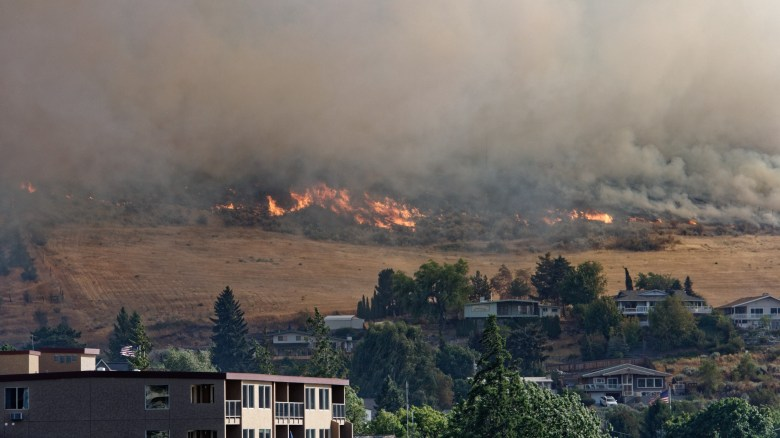 Wildfire Resilience Strategies for Real Estate