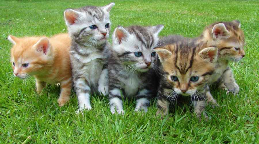 kittens cat cat puppy rush 45170
