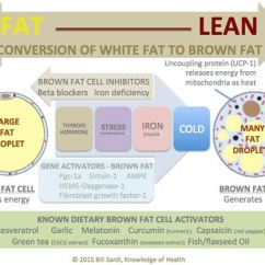 White Fat Cell Diagram E2 Energy The Cold Shower Hot Pepper Brown Weight Control Plan Conversion Of To
