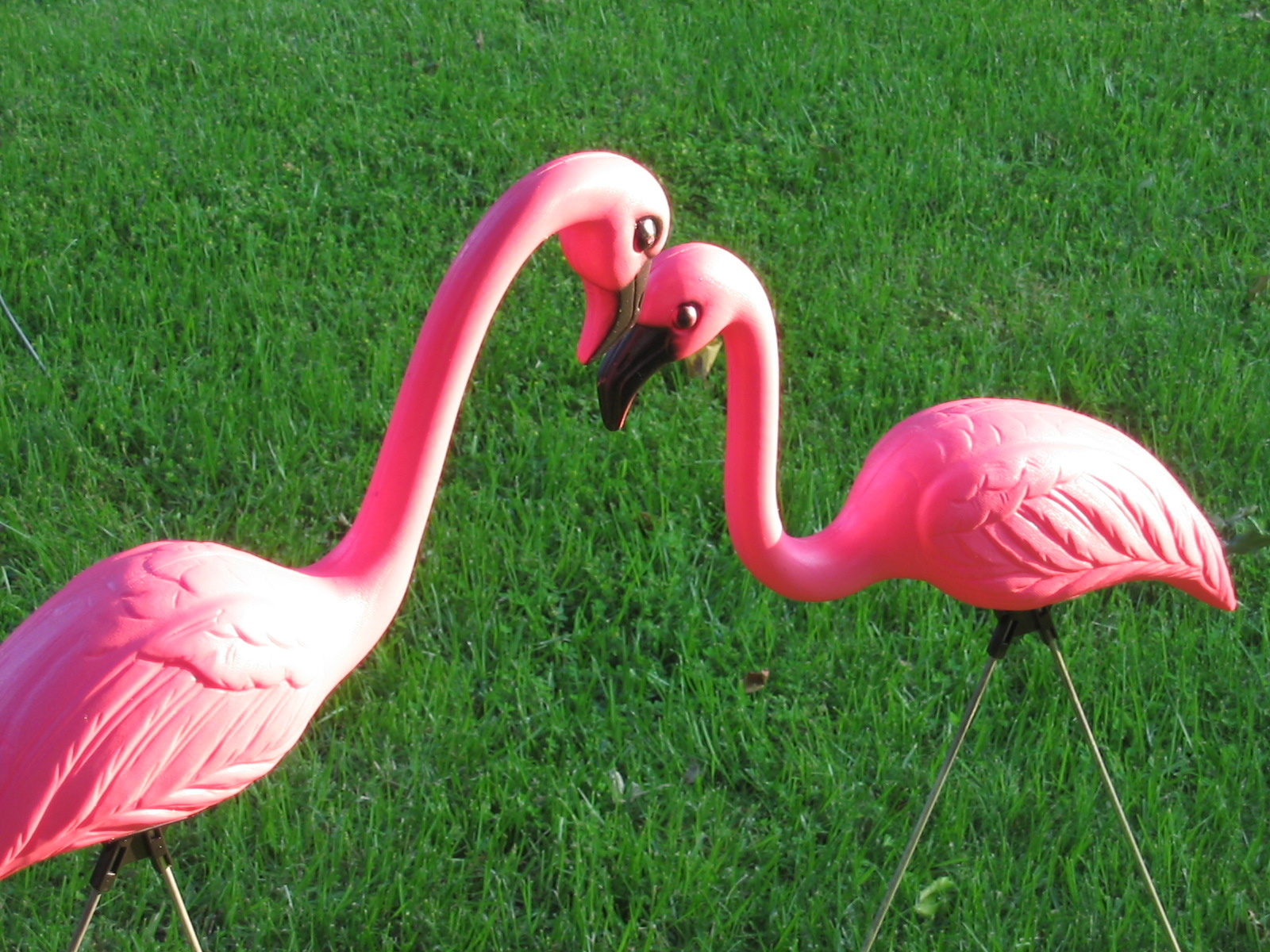 how did plastic pink flamingos end up in front yards