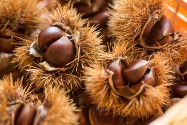 拾った栗が虫食いかどうかの簡単な見分け方について解説します