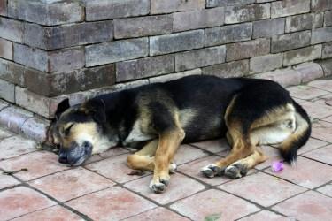 野良犬を保護するための方法とは?その後のことも教えます