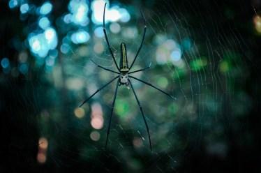家の蜘蛛は縁起が良い?朝と夜の蜘蛛・蜘蛛にまつわる縁起の話