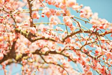 春をイメージさせる言葉や単語を特集!さっそく使ってみませんか