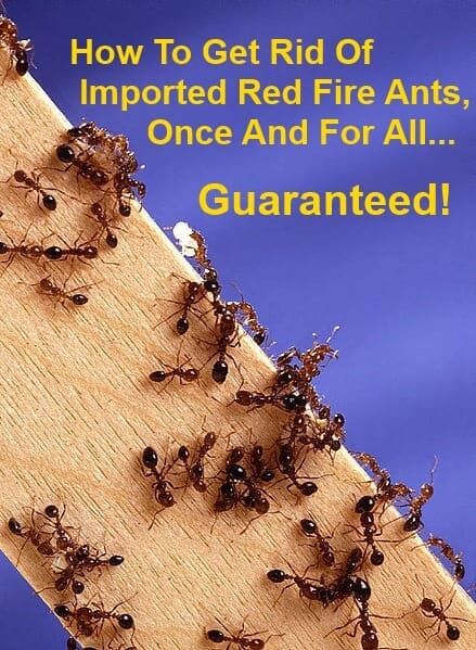 How To Get Rid Of Fire Ants Once And For All