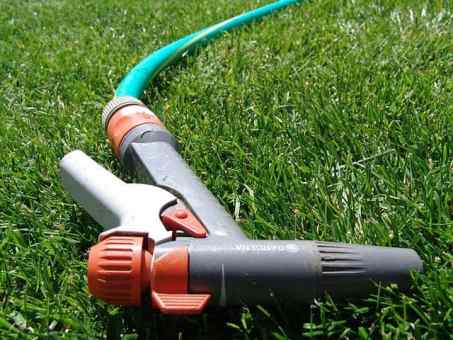 How to get rid of aphids with your garden hose