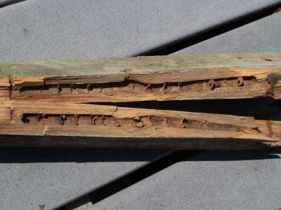Timber damage caused by carpenter bees