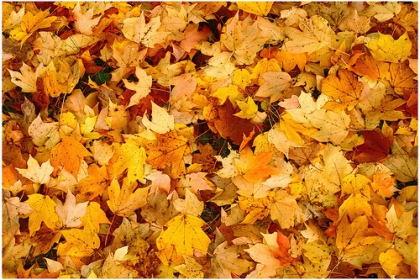 fall-leaves-knoxville