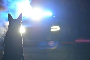 Silhouette of K9 in front of cruiser lights