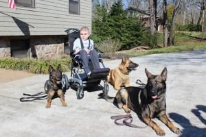 Boy in wheelchair with three k9's