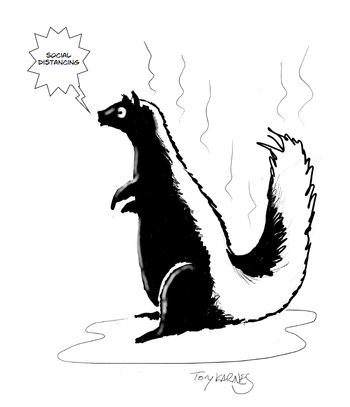 drawing of skunk by Tony Karnes