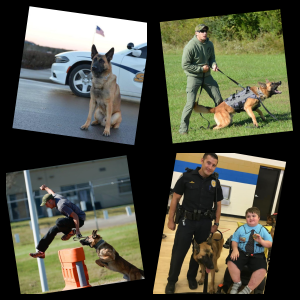 Collage of 4 pictures, k9 upper left, k9 and handler upper right, k9 and person in suit bottom left, k9, handler, and child in bottom right