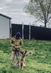 k9 sitting in grass looking at handler