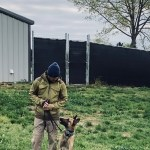 k9 sitting in grass looking at handler