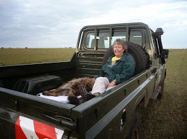 Dee White with a sedated spotted hyena.