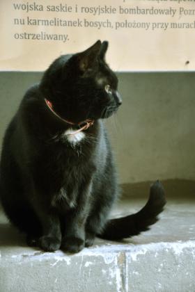 Proszę Państwa, oto kot.