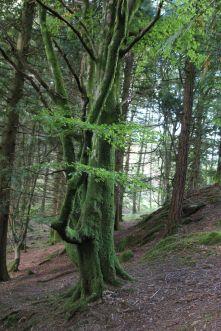 Flauschige Bäume