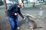 Braves Känguru am Mampfen