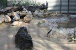 Die tollen Fairy Pinguine am singen