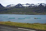 Die meisten Orte hier in den Fjorden haben ihr Geld mit dem Hering-Farmen gemacht. So sieht man auch ab und an ein paar moderne Farmen im Wasser