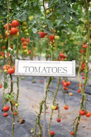 Viiiiele Tomaten