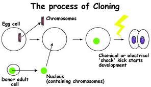 cloning1