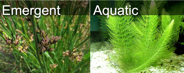 List Floating Water Plants