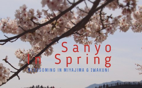 A Blossoming Day in Sanyo