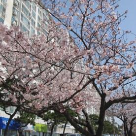 02 Busan MoonTan Road 1
