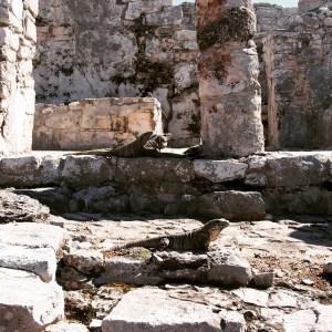 Reptiles roar the ruins