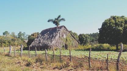 Cuba Vinales Valley 22