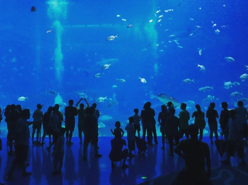 Hengqin Aqua Park - Aquarium