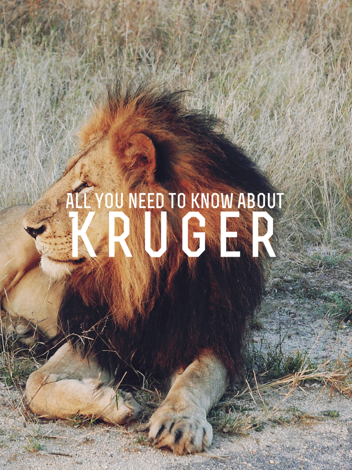 All You Need to Know about… Kruger