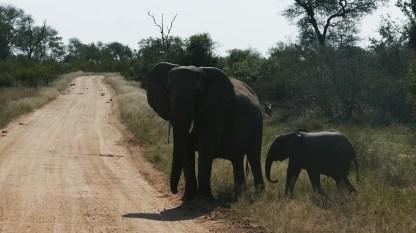 South Africa, Kruger - Safari (4)