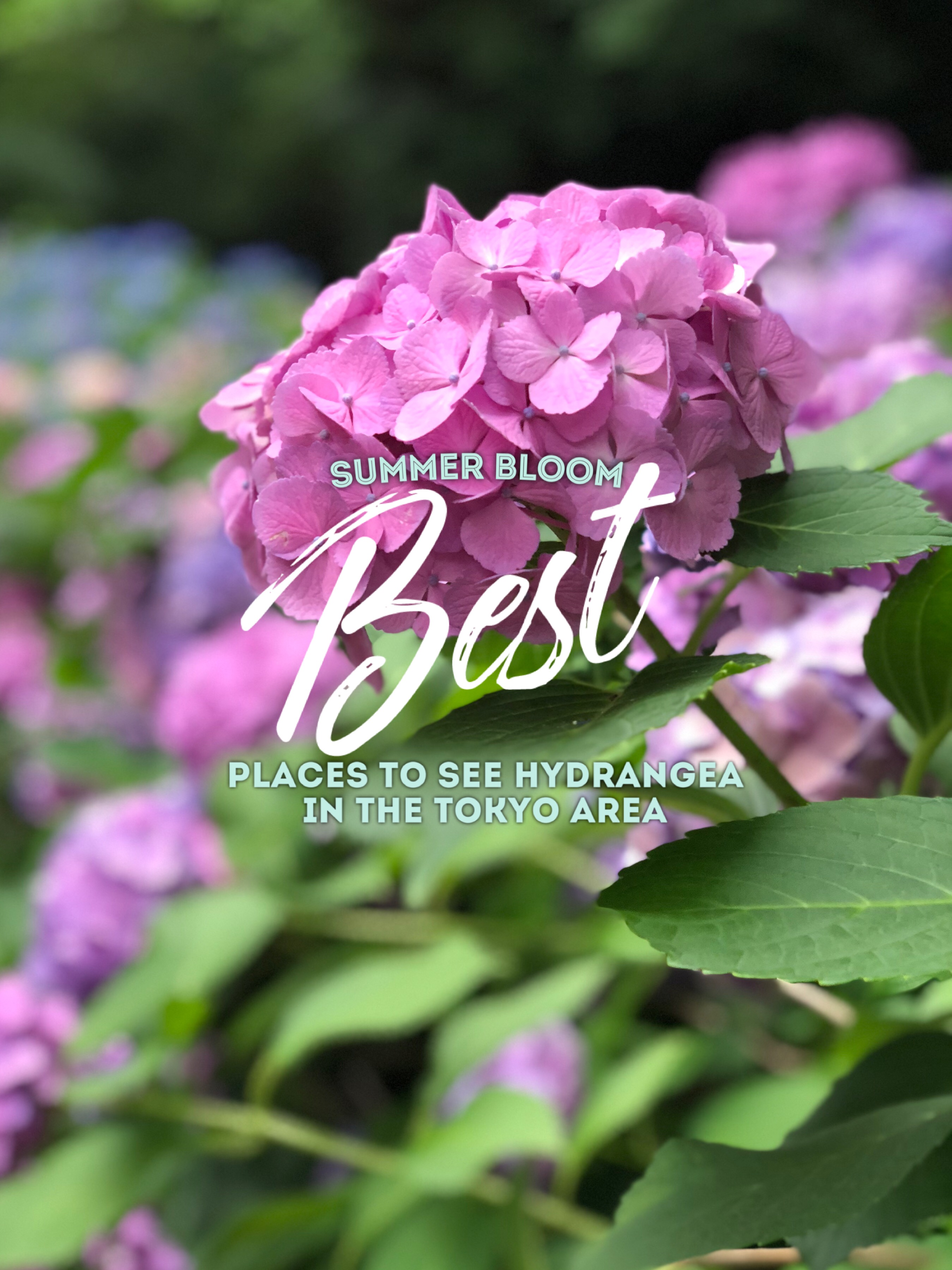 The Summer Bloom. Tokyo.