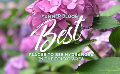 How to Plan a Perfect Summer Day Trip to Tokyo and See Hydrangea