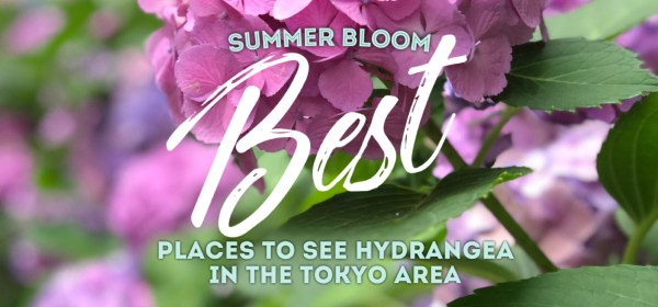 Hydrangea, Tokyo, Japan
