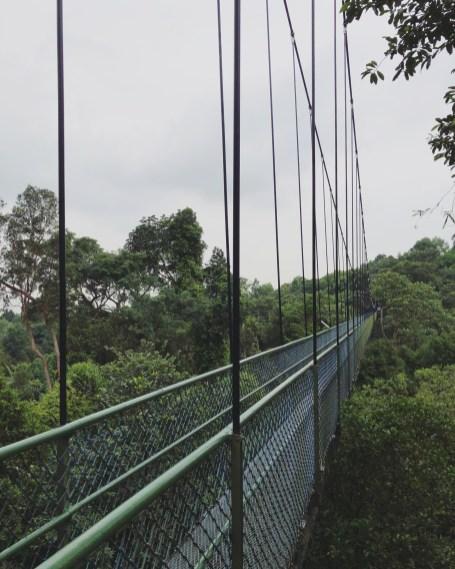 TreeTop Walk 1