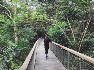 TreeTop Walk 2