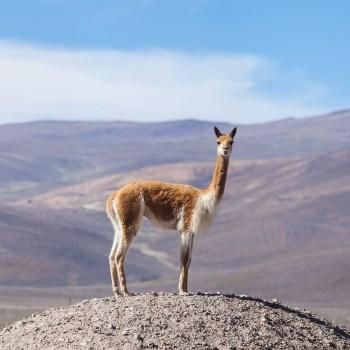 Atacama Salt Flat, Toconao town, Altiplanic Lagoons, Socaire, stargazing 5