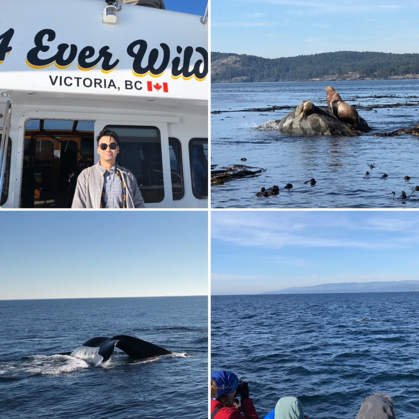3 Whale Watching 2