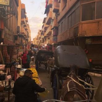 Luxor 3 Horse carriage ride 4