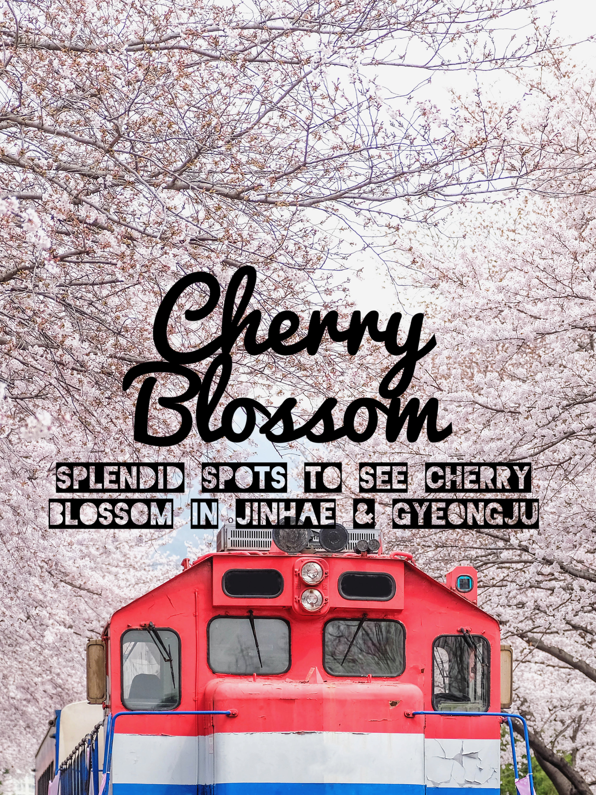 Splendid Spots to See Cherry Blossom in Jinhae and Gyeongju