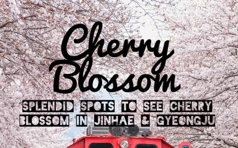 Splendid Spots to See Cherry Blossom in Jinhae and Gyeongju